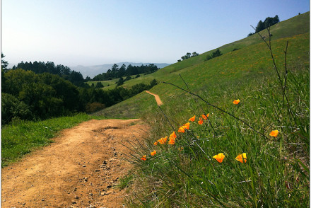 trail through green hills toward ocean