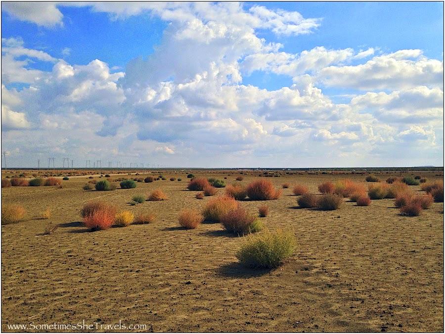 Tumbleweed Heaven