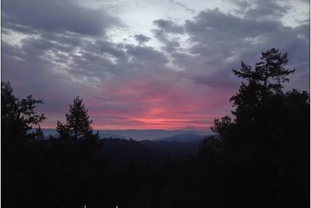 Pink clouds on horizon behind pine trees