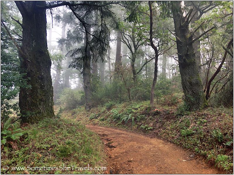 Dirt road through misty rain forest