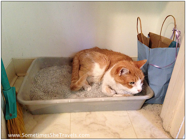 orange and white cat lying in litter box