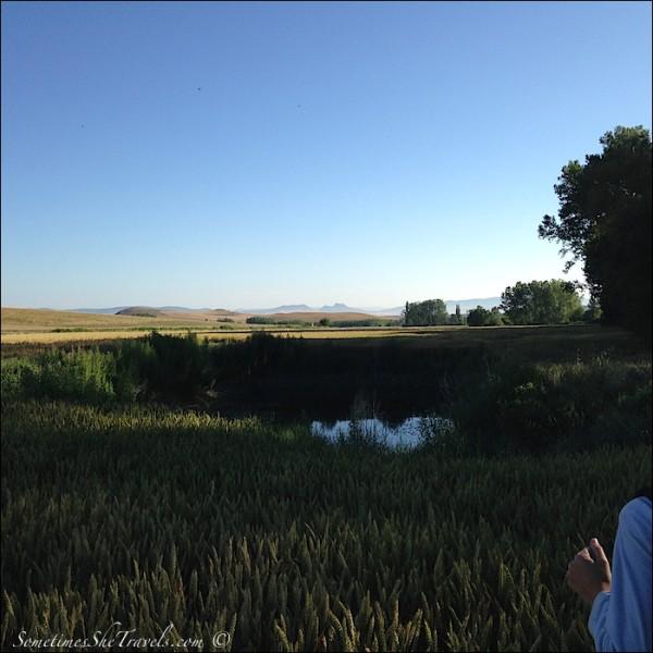 Camino de Santiago | Pond