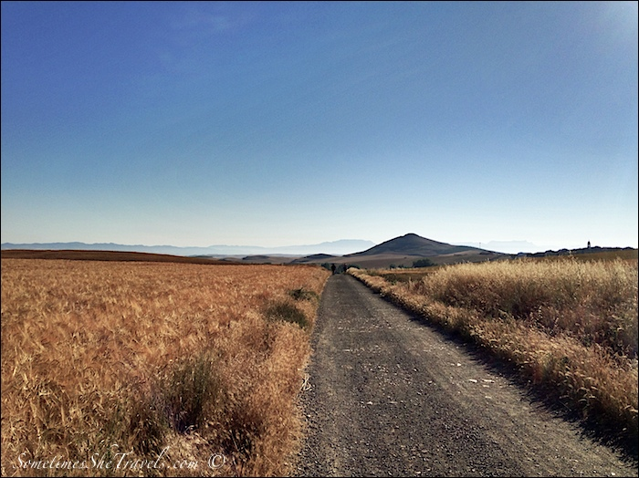 Camino de Santiago | Through the Fields