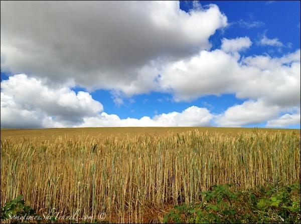 camino de santiago fields and sky