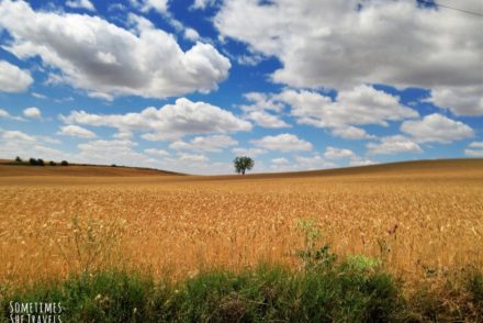 single tree on the edge of a field under a blue sky with white clouds
