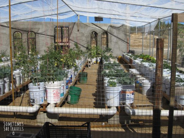 greenhouse with plants in plastic containers connected by plastic tubing