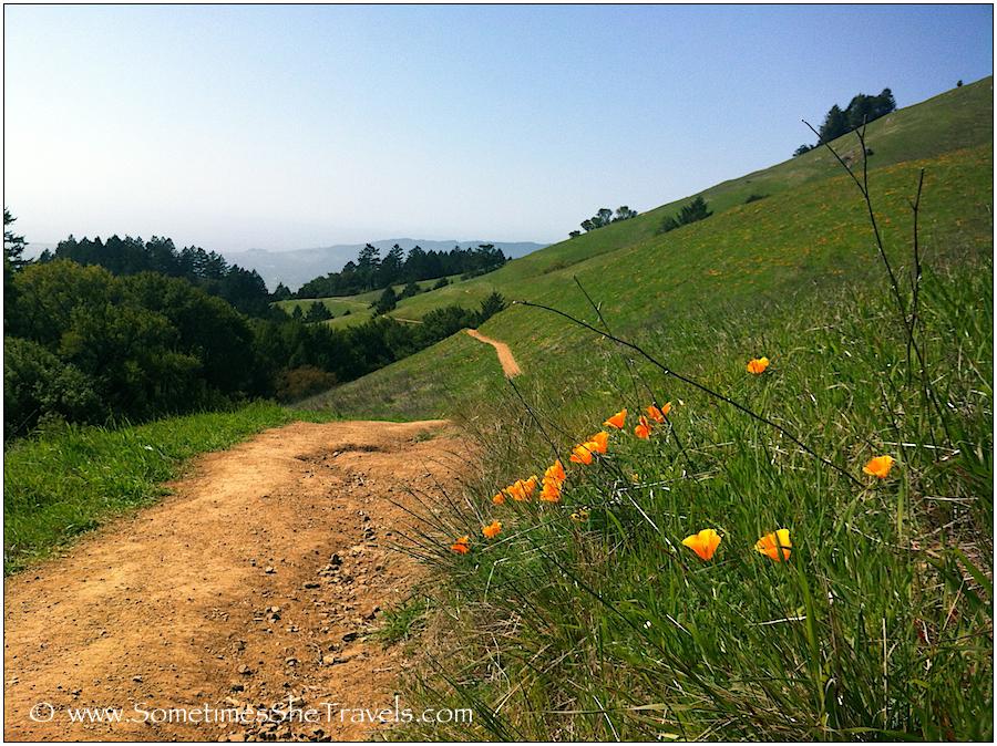 trail through green hills toward ocean