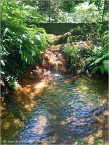 chemical-laden creek?