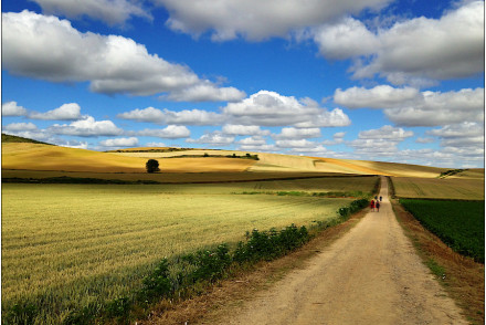 walk on Trail between fields under blue sky with clouds
