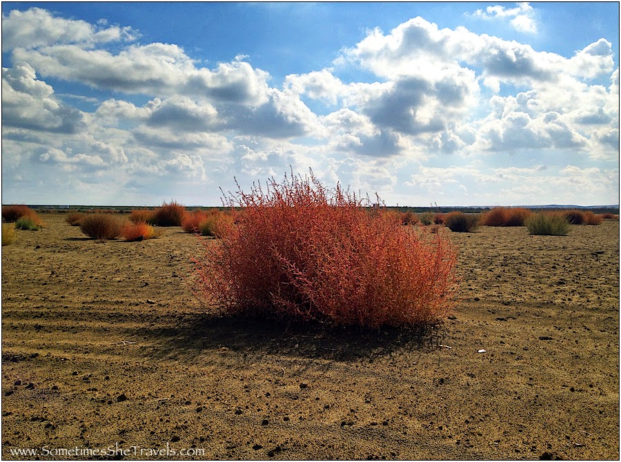 Pink Tumbleweed in desert under partially cloudy sky.