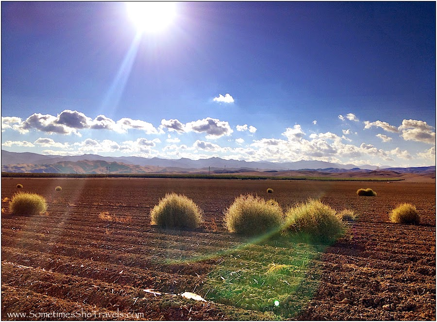 Tumbleweed farm