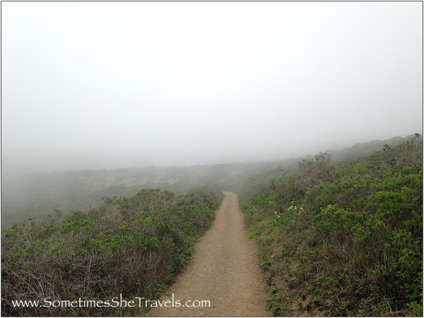 Foggy Dipsea Trail; normally there is a view from here of Stinson Beach