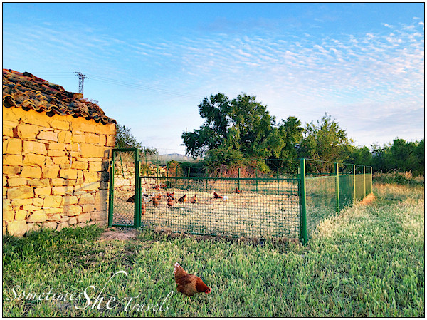 chicken yard and stone building