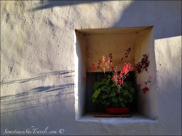 Geranium in a Wall