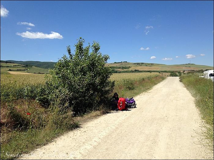 Shade on the Camino de Santiago