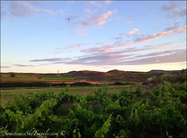 camino de santiago dawn over grapevines and mountains