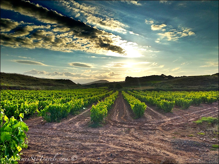 camino de santiago sunrise over grapevines
