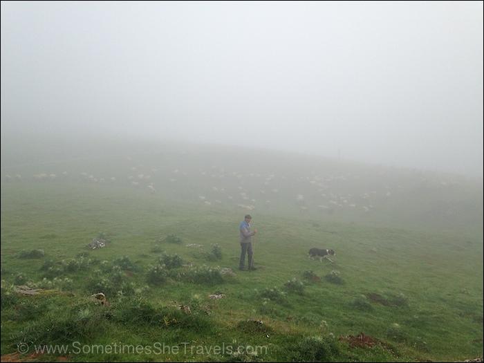 Sheep, shepherd, and dog on green field